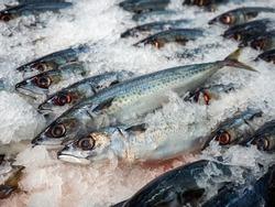 Market Shelf - Saba fish arrange in ice.