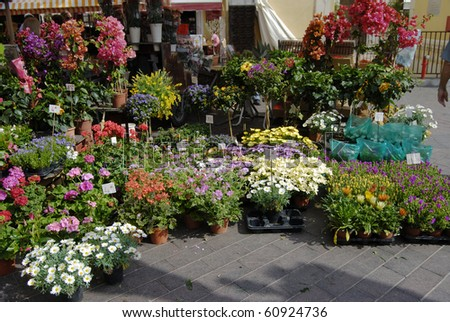 Market stall selling potted plants and flowers in Nice. Cote d'Azur. France