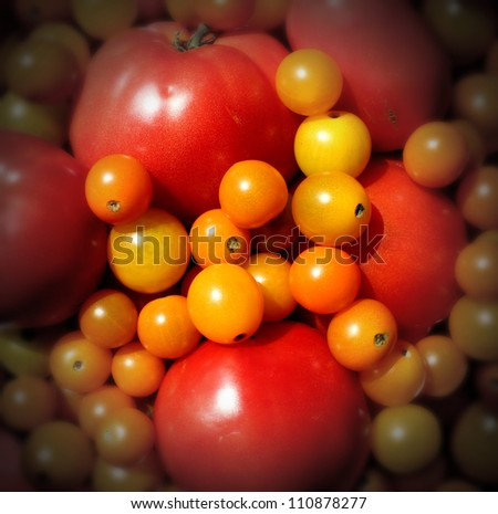 Market tomato wallpaper with a heap of juicy natural mixed red and golden organic tomatoes representing the concept of eating delicious healthy food of fresh fruits and vegetables.