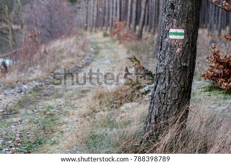 Marking of the tourist route. A tourist road sign on the bark of a pine tree. Forest in the winter. #788398789