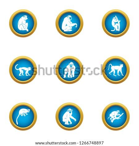 Marmoset icons set. Flat set of 9 marmoset icons for web isolated on white background