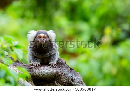 marmoset in a tree in the woods