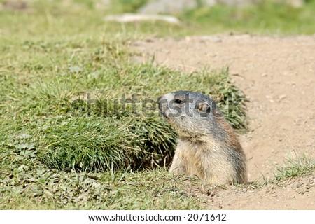 Marmot's Hole
