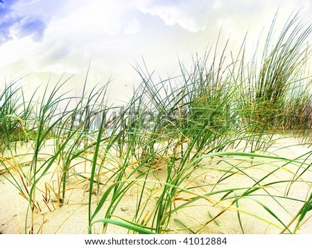 marram grass in the sand with clouds above