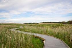 Marsh boardwalk trail in park cloudy day