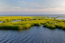 Marsh Grass Glowing in Evening Sun