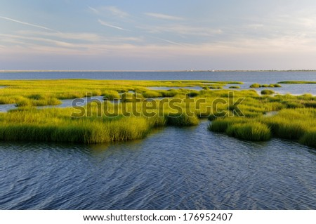 Marsh Grass Glowing in Evening Sun