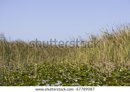 Marsh grass, water-lilies and the blue sky