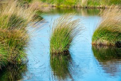 Marsh Grasses Poster or Background image of the beautiful post-glacial pools at Cors Caron Nature Reserve, Central Wales