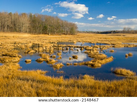 Marsh in autumn gold, northeastern US