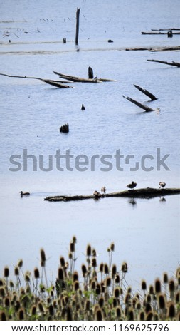 Marsh land habitat with birds and turtles congregating on driftwood.