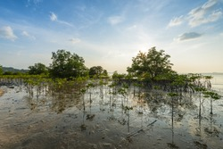 Marsh land in Thailand at sunset