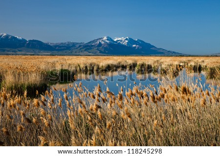 Marsh Land with Mountain in the Background