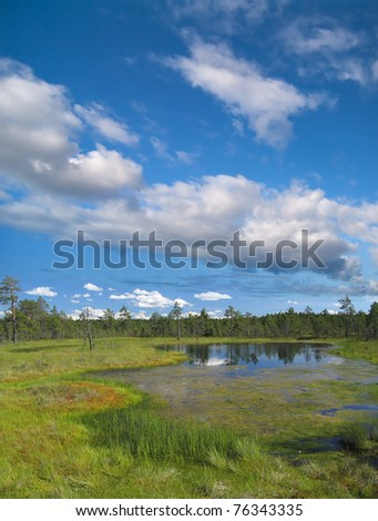 Marsh with pine trees