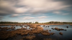 Marshland at Thursley Nature Reserve