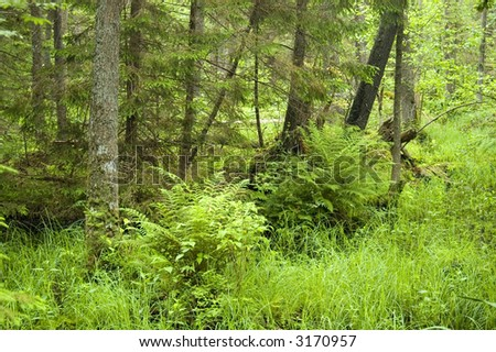 Marshy natural forest with group of ferns in foreground