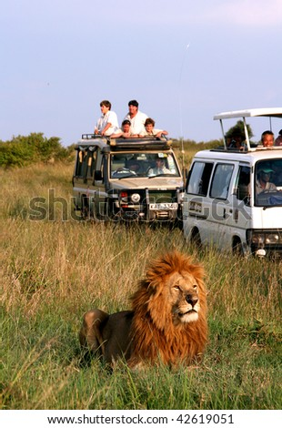 MASAI MARA - JUNE 22: Picture of some tourists in a car looking a lion during a typical day of a safari on June 22, 2007 in Masai Mara, Kenya.
