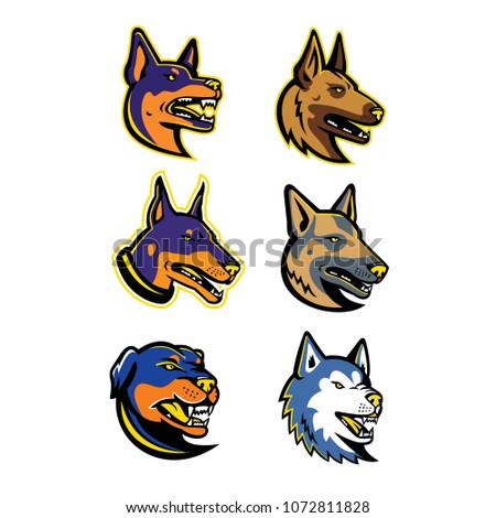 Mascot icon illustration set of heads of guard dogs like the Australian Kelpie, Belgian Malinois, Doberman Pinscher dog, German Shepherd, Rottweiler and the Siberian Husky viewed side in retro style.