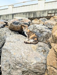 Masking cat in stones. Marina di Pisa, Italy. The cat who lives in the stones.  Camouflage. Sleepy cute cat. Homeless animals. Volunteering. Hefty Stones.