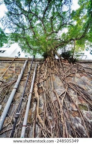 masonry wall tree in Hong Kong