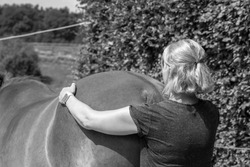 massage, equine, animal, animals, back, boy, care, child, closeup, equestrian, equine therapy, equipment, exercises, farm, female, hands, happiness, happy, head, health, horse, injuries, injury, joint