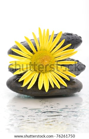massaging spa stones with flower
