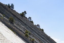 Massive gray rocks with trees against a bright blue sky in a wild beach area. Picturesque summer landscape. Steep slope and pine trees. The resort town of Gelendzhik. Russia, Black Sea coast