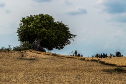 Massive Tree and People by the Beach in Pottuvil (Arugam Bay), Sri Lanka