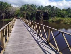 Mata de São João; Bahia; Brazil. Bridge over the Timeantube River; entrance to the park Klaus Peter / Praia do Forte. final part