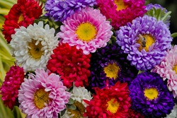 Matsumoto Aster (Callistephus chinensis). Colorful bouquet of colorful flowers