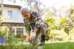 Mature man working in the garden