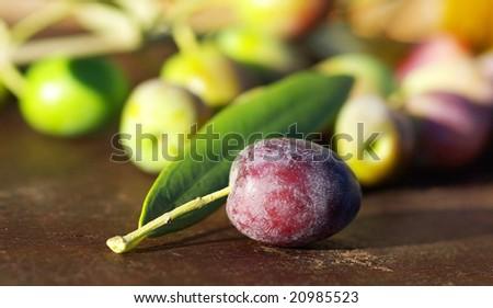 Mature Olive on leaf.