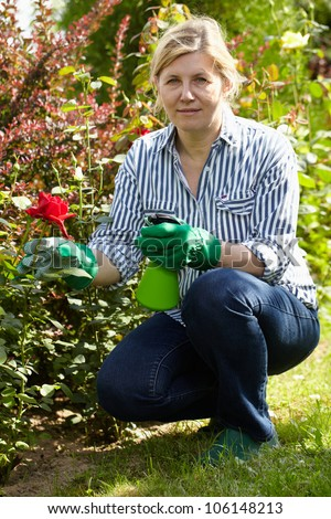 Mature woman look after her garden, spray water over red roses using green bottle