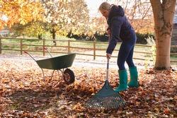 Mature Woman Raking Autumn Leaves In Garden