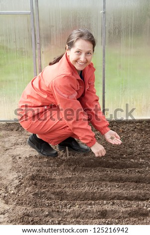 Mature woman  sows seeds in soil at hothouse