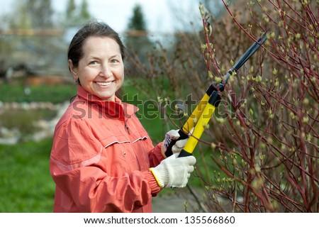 Mature woman trimming bough of an bush in spring garden