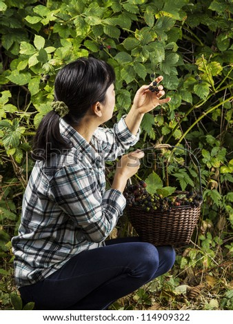 Mature women inspecting fresh blackberries while still attached to the stem