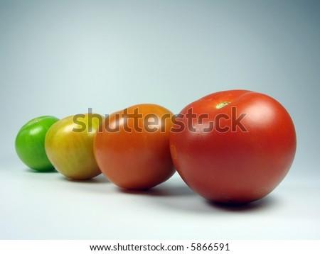 Maturing tomatoes