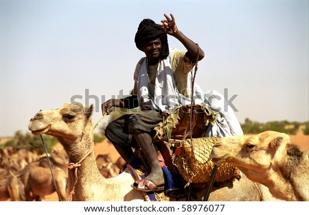 MAURITANIA - JANUARY 6: Tuareg camel rider in the desert takes care of his camel herd on January 6, 2006, Mauritania. The tuareg are great help in the desert.