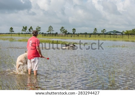 May 30, 2015 - Beverly Kaufman Dog Park, Katy, TX: man with dogs playing swim fetch in standing flood waters covering fields and trails