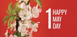 May Day greeting card with blooming white cherry tree. Feast day may 1. Happy May Day Poster. Spring white flowers on a red background