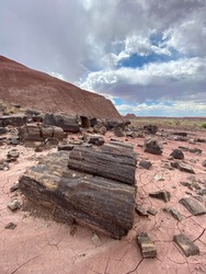May 31 2020 - many pieces of petrified wood lay in hardened sand along a wash to Onyx Bridge in Petrified Forest National Park in Arizona USA with a canyon and cloudy sky in the background.