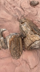 May 31 2020 - two pieces of petrified wood lay half buried in sand along a wash that is part of the trail to Onyx Bridge in Petrified Forest National Park in Arizona USA