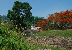 Maya temple ruins with palace and observation tower surrounded by orange blossoms, Palanque, Chiapas, Mexico