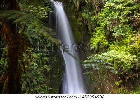McLaren Falls Park in Tauranga in New Zealand. Beautiful waterfall among bright green vegetation with blurred vegetation foreground; a tourist attraction. Long exposure. #1453994906