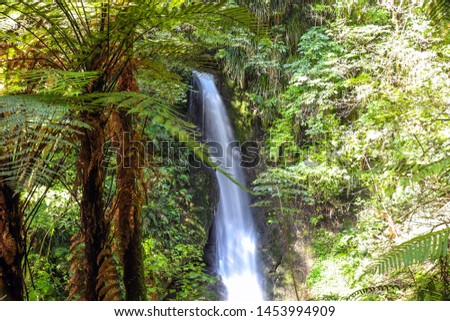 McLaren Falls Park in Tauranga in New Zealand. Beautiful waterfall among bright green vegetation with blurred vegetation foreground; a tourist attraction. Long exposure.