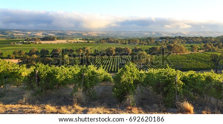 Stock Photo McLaren Vale, South Australia Wine region