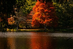 Mclarens falls park NZ north island april 2021 one bright orange red coloured large tree reflecting onto the lake with wildlife in the water birds one singular person sitting on park bench beside lake