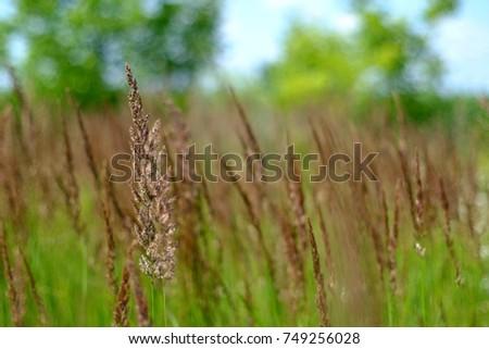 meadow #749256028