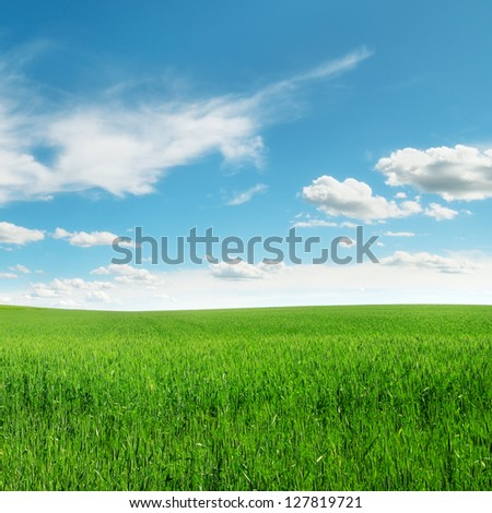 meadow and beautiful blue sky